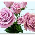 Красивые розы крючком детальная схема вязания